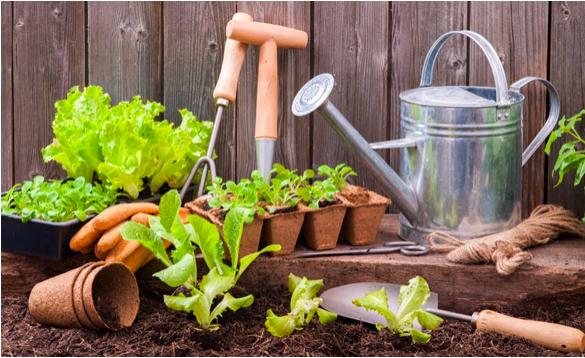 5 Useful Tools that Can Help You in Gardening